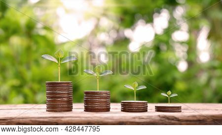 Coins And Trees Are Planted On Piles Of Coins For Finance And Banking. Downward Trend Concept For In
