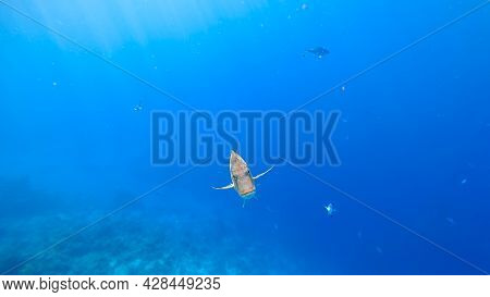 Tropical Fish Swims Out Of The Blue Sea Background, Swims Straight Into The Camera With A Menacing L