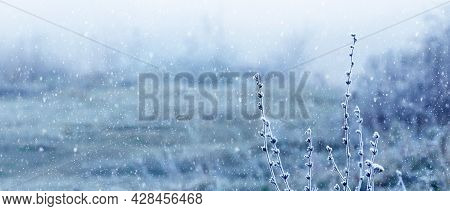 Snowfall In The Field. Frost-covered Twigs Of Plants On A Blurred Background During A Snowfall. Chri