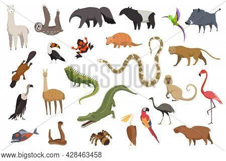 Animals of south america. Nature fauna collection. Geographical local fauna. Mammals living on continent.  illustration in kids style