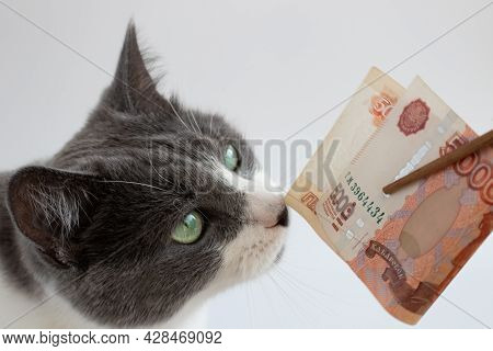 Portrait Of Cat Sniffing Russian 5000 Banknotes. Closeup