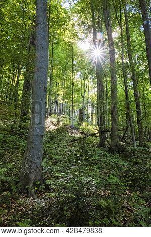 Sunrays In Primeval Forest Stuzica, National Park Of Poloniny, Slovak Republic. Seasonal Natural Sce