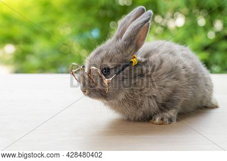 Bunny Animal Easter Holiday Concept. Lovely Brown Baby Rabbit Wearing Eyeglasses Sitting On The Wood