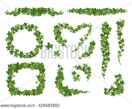 Ivy Climbing Set With Isolated Images Of Ripe Green Shapes Of Different Shape And Leaf Lines Vector