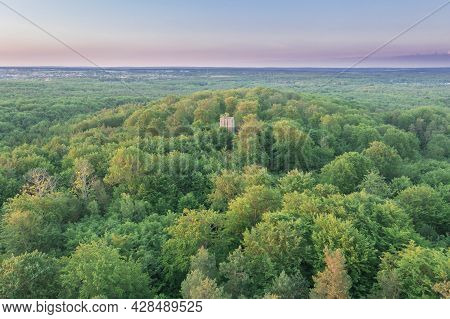 A Forest Complex Called The Green Forest Located Near The City Of Żary In Poland. It Is A Deciduous