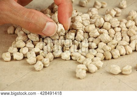 Human Fingers Hold Dried Chickpea Seed To Estimate Or Compare The Size, On Craft Paper, Chickpea See