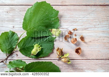 Hazelnuts, Fresh, Ripe In The Shell And Cracked With A Hazel Twig And Leaves On A Light Rustic Woode