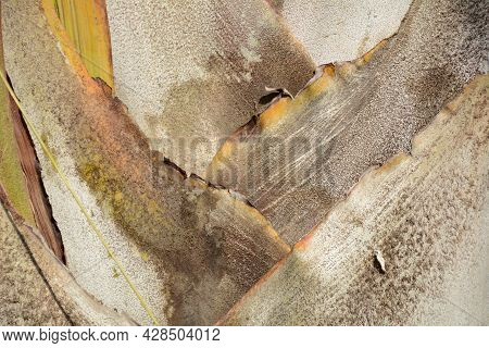Macro Of A Palm Tree Trunk Texture Background.  Trunk Texture Close Up.