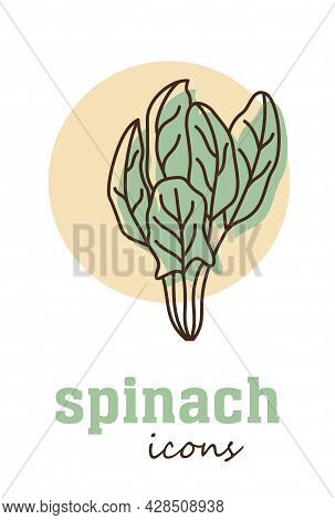 Spinach Vector Icon. Vegetable Green Leaves. Greenery. Culinary Herb Spice For Cooking, Medical, Gar