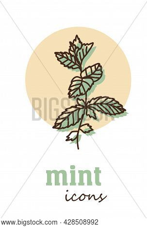 Mint Vector Icon. Vegetable Green Leaves. Greenery. Culinary Herb Spice For Cooking, Medical, Garden