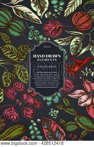 Card Design On Dark Background With Ficus, Iresine, Kalanchoe, Calathea, Guzmania, Cactus Stock Illu
