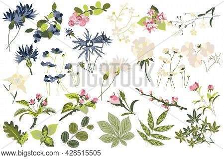 Flower And Plants Isolated Set. Flowering Garden And Blooming Wildflowers Different Types. Green Lea