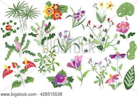Flower And Plants Isolated Set. Flowering And Blooming Wildflowers, Greenery, Wild Foliage And Other