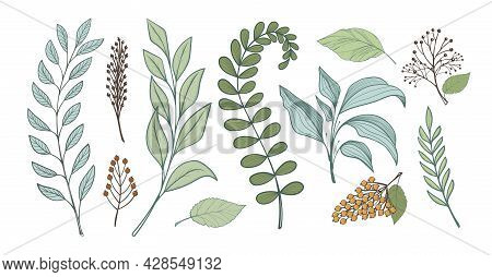Bunch Of Leaves For Design, Linear Handmade Drawing. Branches Of Forest Plants, Fern Grass. Full Col