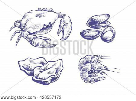 Hand Drawn Seafoods. Hand Drawn Oysters And Mussels, Crabs And Shrimps. Shellfish Natural Seafood In