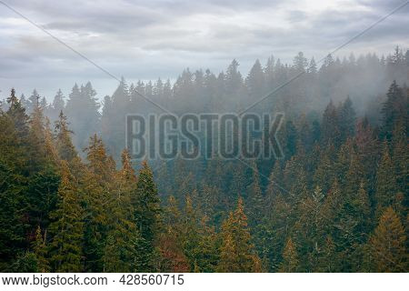 Coniferous Forest On A Foggy Day. Green Nature Background With Autumnal Grey Sky. Mysterious Atmosph