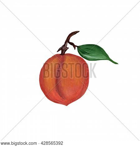 Peach Fruit, Nectarine With Green Leaf Isolated On White Background. Icon. Watercolor Illustration.