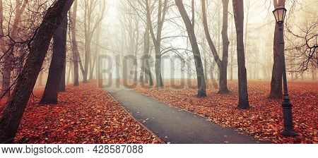 Fall landscape. Fall in the city park. Fall park in picturesque tones. Diffusion filter applied. Fall forest, fall trees in the fall foggy park. Fall nature, fall alley in the fog, fall background