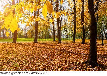 Autumn landscape. Autumn city park, orange fallen autumn leaves on the foreground. Colourful autumn park in sunny autumn weather, autumn landscape, autumn trees in the park, autumn trees with yellow autumn foliage