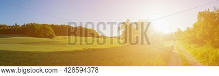 Panorama of green spring field and dirt road at sunrise