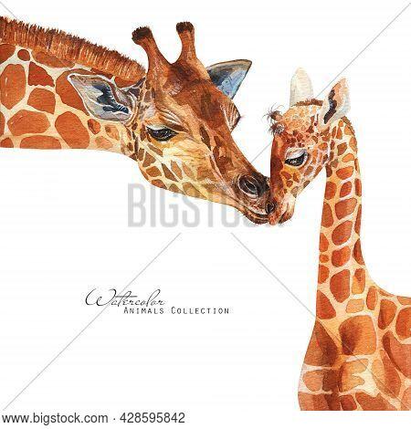 Giraffe And Baby Portrait. Giraffes Family Watercolor Illustration