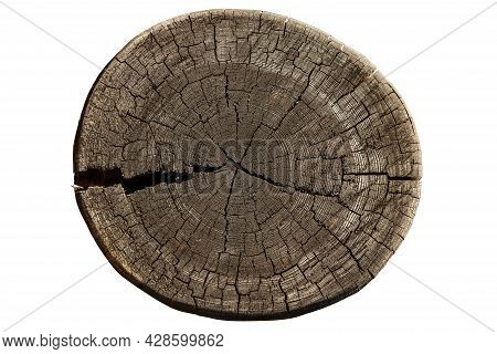 Cross Section Of Tree Trunk Showing Growth Rings Isolated On White Background. Log. Timber Wood Text