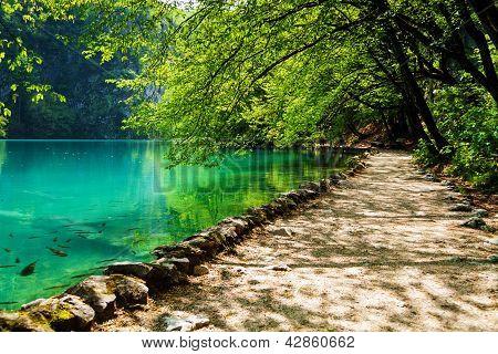 Camino cerca de un lago del bosque con los pescados en el Parque Nacional de Plitvice, Croacia
