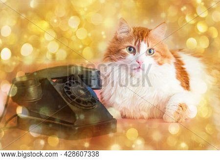 Rea Adult Pretty Cat And Retro Telephone On Golden Background