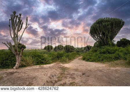 Panoramic Landscape, National Parks Of Uganda, Africa