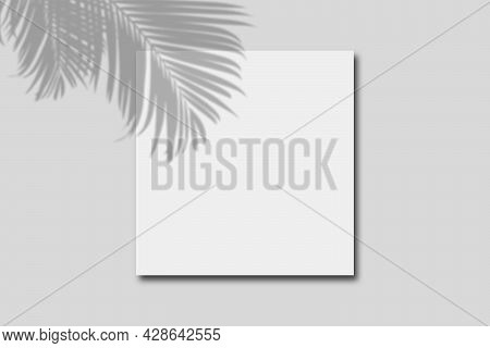 Empty Space Of White Paper Board On Great Wall With Palm Leaves Shadow.