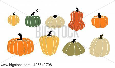 Cartoon Squash. Autumn Pumpkin Harvest. Ripe Vegetables For Halloween And Thanksgiving Fall Holidays