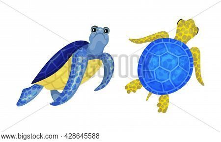 Tropical Turtle Reptile For Freshwater And Saltwater Aquarium Vector Set