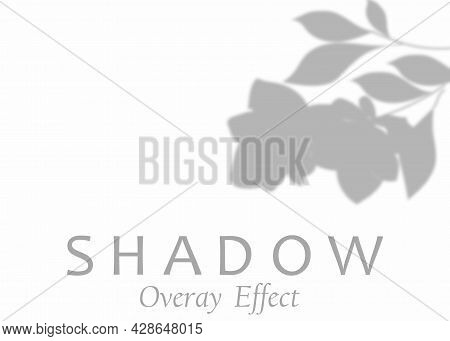 Shadow Overlay Effect. Transparent Soft Light And Shadows From Plant Branches, Leaves And Foliage.