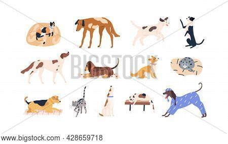 Set Of Cute Pets. Adorable Cats, Dogs Of Different Breeds. Collection Of Funny Feline And Canine Ani