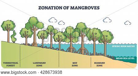 Zonation Of Mangroves Trees As Forest Plant Species Ecosystem Outline Diagram. Scheme With Terrestri