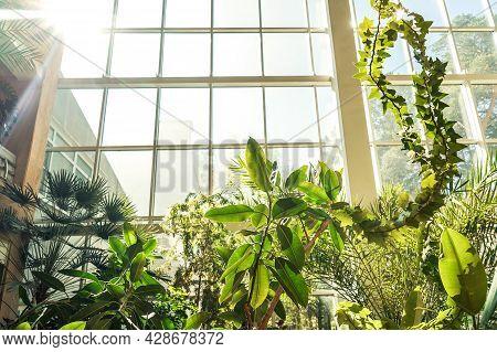 Green Plants In Botanical Garden Indoor. Window.