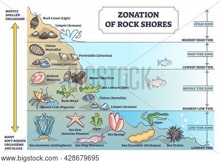 Zonation Of Rock Shores With Underwater Species And Organisms Outline Diagram. Scheme With Spray And