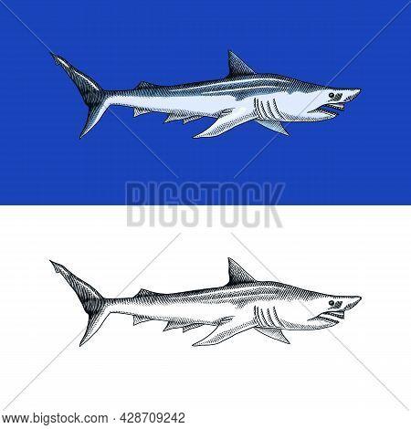 Basking Or Sand Shark. Marine Predatory Animal. Sea Life. Hand Drawn Vintage Engraved Sketch. Ocean