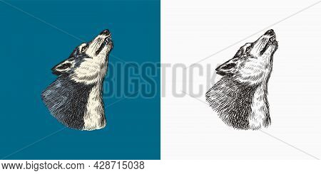 Gray Wolf Howling. A Predatory Beast. Wild Forest Animal. Vector Engraved Hand Drawn Vintage Old Ske
