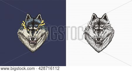 Gray Wolf. A Predatory Beast. Wild Forest Animal. Vector Engraved Hand Drawn Vintage Old Sketch For