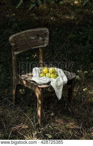 Ripe Apples Harvested On An Aged Wooden Chair In The Garden. Harvest Apples In The Village.