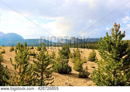 Pine Trees Besides An Alpine Meadow On A Mountain Plateau Surrounded By Summer Monsoon Thunderstorms