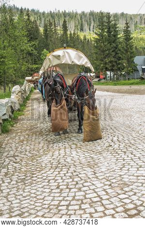 Horses Grazing, Two Horses Harnessed To The Cart Are Waiting For Passengers Who Want To Enter Morski