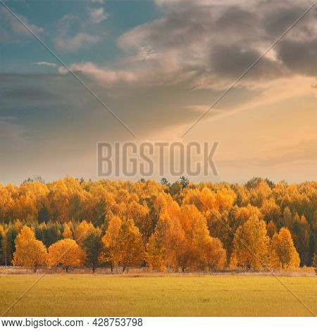 Autumn landscape yellow trees in fall forest under moody sunset sky.