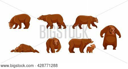 Set Of Large Brown Bear In Different Poses Looking, Running, Walking, Sleeping, Attack. Wild Forest