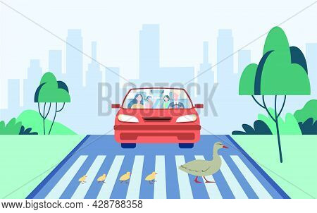 Cute Mother Duck With Kids Crossing Road. Car, Crossroad, City Flat Vector Illustration. Birds And A
