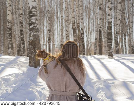 A Bengal Cat With A Surprised Face Is Traveling On The Shoulder Of An Unknown Girl.