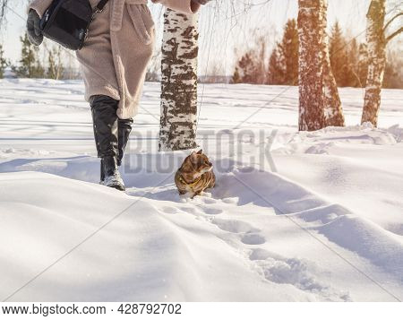 A Girl Walks With A Bengal Domestic Cat On A Snow Road In Winter.