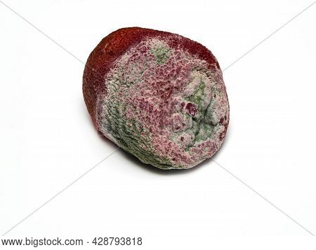 One Rotten, Half Decomposed, Limp, Green-white Mildewed Fruit On A White Background. Rot, Mold Close