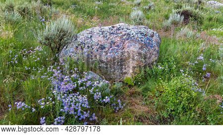 Large colorful boulder in alpine meadow with wildflowers near Crested Butte ,Colorado